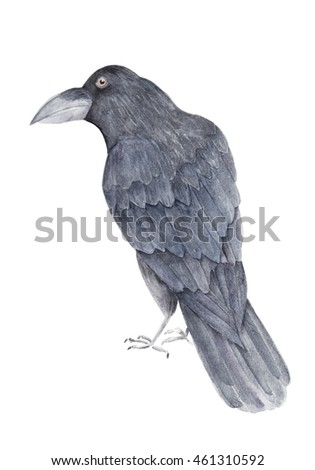 Watercolor raven. Isolated bird on white background. For cards, halloween, t-shirts, textile