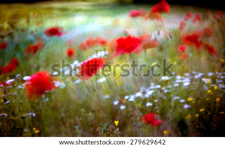 Watercolor red poppy field  - stock photo