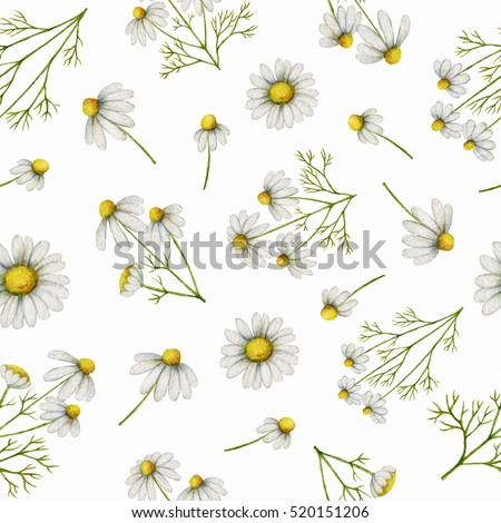 Watercolor seamless pattern with daisy flowers and branches. Background for textile, paper and other print and web projects.