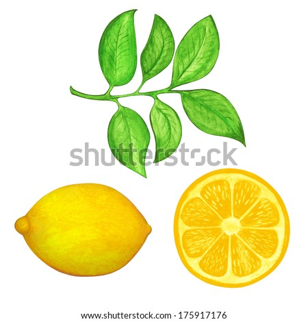 Watercolor set lemon, slice lemon and leafs isolated - illustration - stock photo
