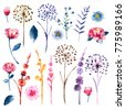 Watercolor set of botanic floral blooming natural elements. Wild flowers, twigs and leaves. Botanical bright classic collection isolated on white background.