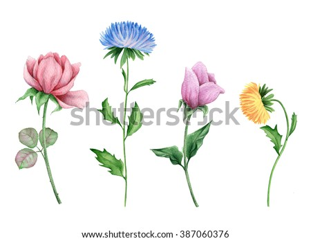 Watercolor set of delicate flowers - stock photo
