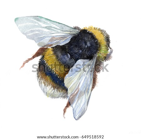 Watercolor Single Bumblebee Insect Animal Isolated On A White Background Illustration