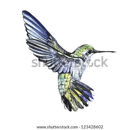 Hummingbird Stock Photos Images Amp Pictures