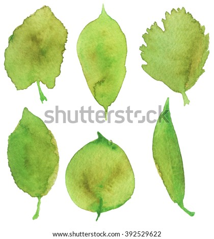 watercolor sketch of the leaves on a white background - stock photo