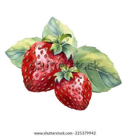 watercolor strawberry  - stock photo