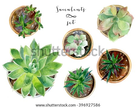 Watercolor succulent collection. Set with plants in pots - stock photo