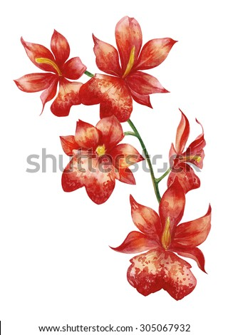 Watercolor tropical red orchid flower with five big flowers - stock photo