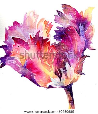 Watercolor tulip illustration - stock photo