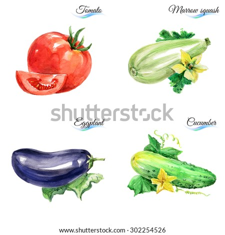 Watercolor vegetables isolated on white background for design - stock photo