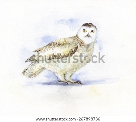 watercolor white owl character - stock photo