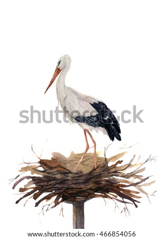 Watercolor white stork in the nest. Hand painted ciconia bird illustration isolated on white background. For design, prints or background