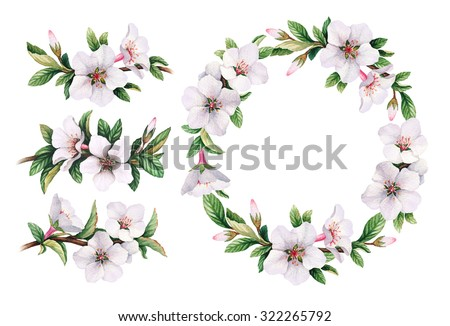 Watercolor wild flowers illustration - stock photo