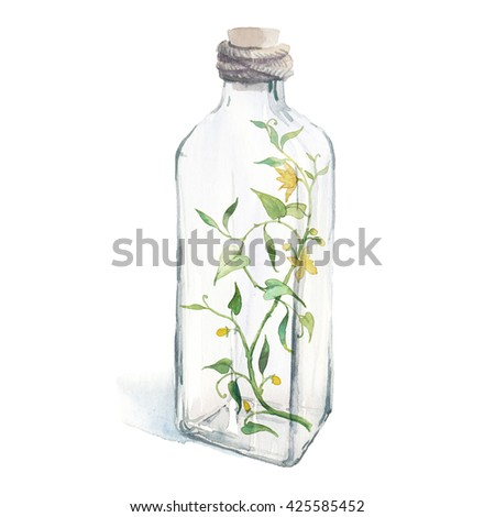 Watercolor wild plant with flowers in glass bottle. Hand painted botanical illustration of sprout isolated on white background. Fantasy collection - stock photo