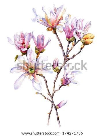 Watercolor with Magnolia flower - stock photo