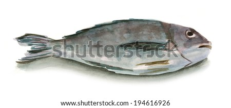 Watercolour fish on white background - stock photo