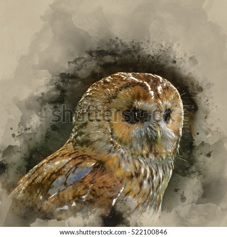Watercolour image of Beautiful portrait of Tawny Owl Strix Aluco