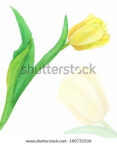 Watercolour tulips card on white background (isolated)