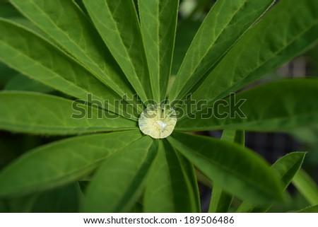 Waterdrop on leaf - stock photo