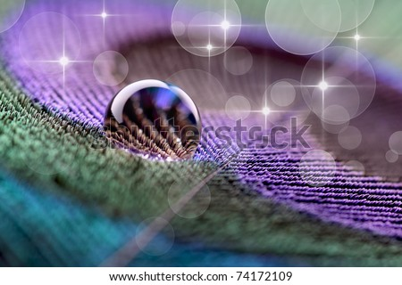 Waterdrop on peacock feather with bokeh - stock photo