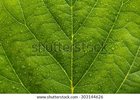waterdrops on a green leaf - stock photo