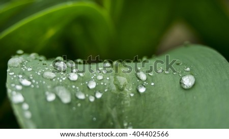 waterdrops on green flower