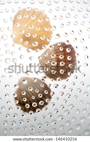waterdrops picturing sea shells - stock photo