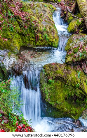 """Waterfall in the forest. Wild forest areas in the resort reserve """"Black Forest"""" in Germany - stock photo"""