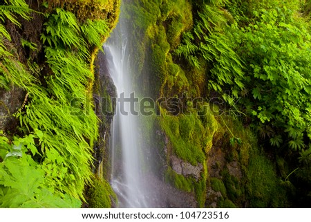 Waterfall with lush Maidenhair Ferns, Olympic National Park, WA - stock photo
