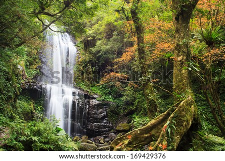 Waterfall with nice maple tree for adv or others purpose use
