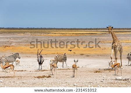 Waterhole in Etosha with Giraffe, Springbok Zebra and Oryx - stock photo