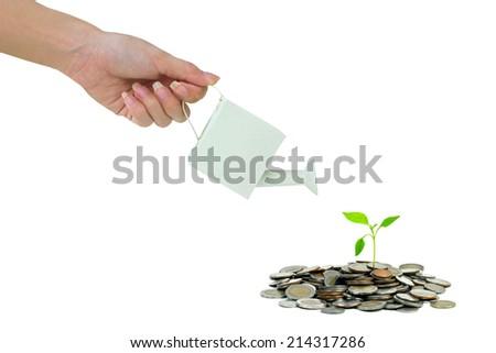 watering a money tree - stock photo