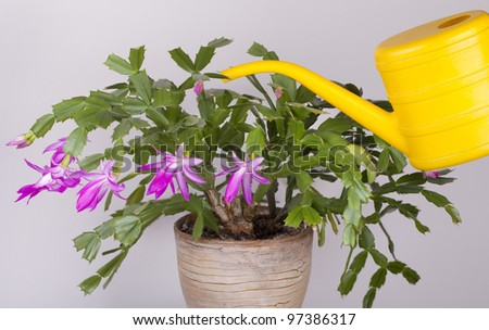Watering a plant with watering can - stock photo