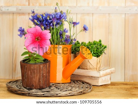 watering can and plants in flowerpots on wooden background - stock photo