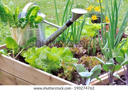 watering can in a garden square among salads - stock photo