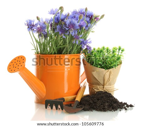 watering can,  tools and plants in flowerpot isolated on white - stock photo