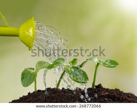 Watering can watering young plants in pile of soil - stock photo