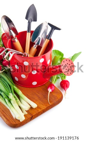 Watering can with garden tools fresh vegetables radish and onion. Isolated on white background - stock photo
