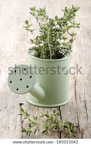 watering can with thyme on wooden table - stock photo