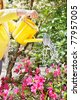 Watering dry flowers with a yellow watering can - stock photo