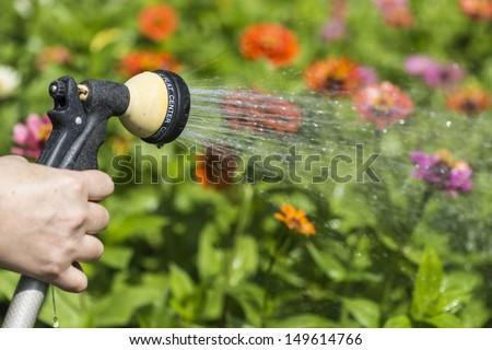 watering flower garden - stock photo