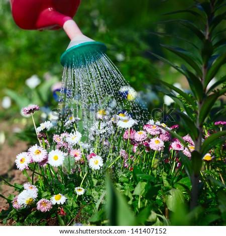 Watering flowers - stock photo