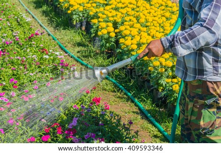 Watering flowers with a watering can near yellow flowers garden.selective focus. - stock photo