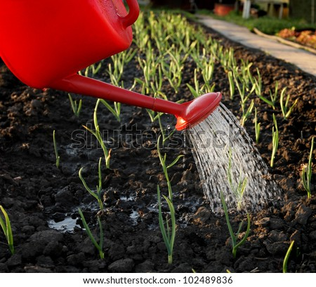 Watering of the garden bed - stock photo
