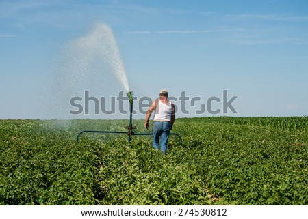 Watering potatoes.