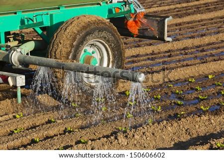 watering seedlings - stock photo
