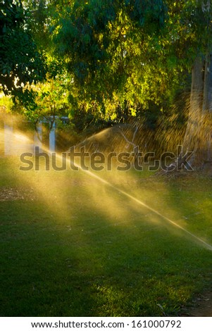 Watering the grass in park on sunset - stock photo