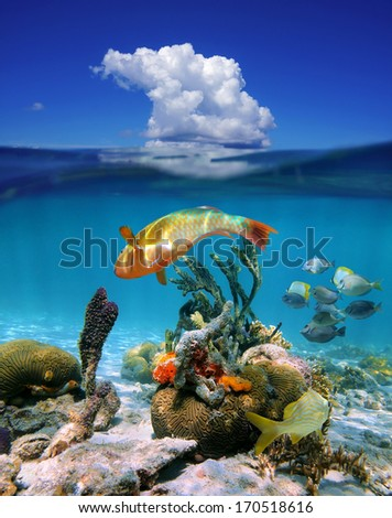 Waterline with underwater colorful tropical marine life and above surface blue sky with a cloud, Caribbean sea - stock photo