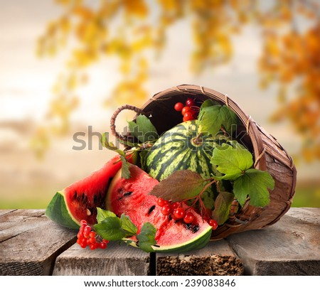 Watermelons in a basket on a nature background - stock photo