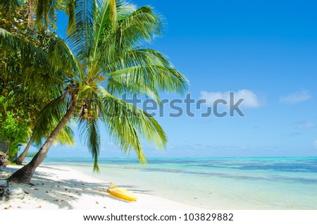 Watersport kayak under a palm tree on a tropical white sand beach with a blue sea on Moorea, an island in the Tahiti archipelago French Polynesia. - stock photo
